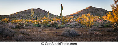 Panorama of the Desert Landscape of Arizona