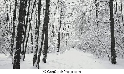 Panorama of the forest at winter