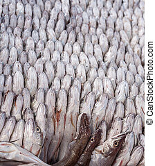 Fresh fish - Panorama of The Fresh fish tightly packed ...