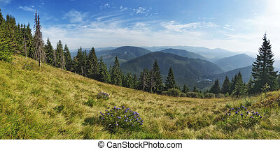 Panorama of the lake Synevir in the Carpathians.