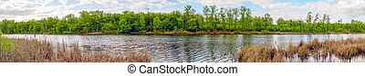 Panorama of the lake with a forest on opposite shore