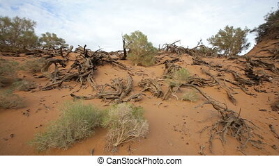 Panorama of the Mongolian landscape, driftwood, sand