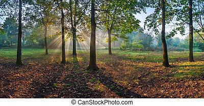Panorama of the oak wood