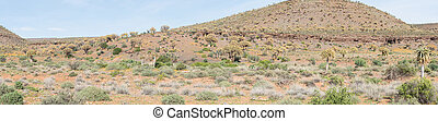 Panorama of the Quiver Tree Forest at Gannabos