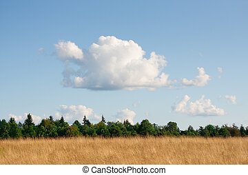 Panorama of the rural landscape.