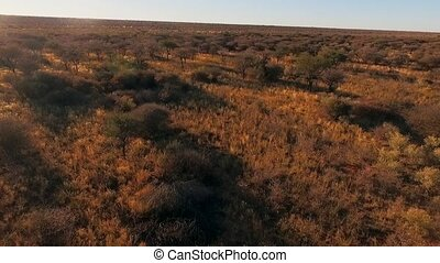 Panorama of the savannah of Namibia and the sky at sunset.