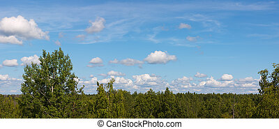 sky with clouds over wood