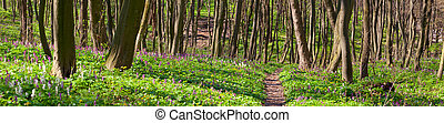 Panorama of the spring forest. The path between the fields of blooming flowers