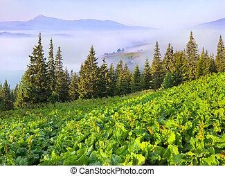 Panorama of the summer Carpathian mountain village in the mist. Ukrtaine, Europe.