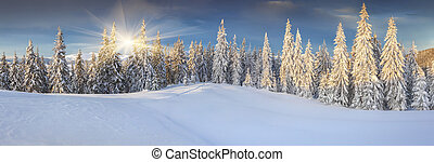 Panorama of the sunny winter landscape in the mountains