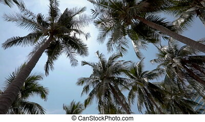 panorama of the tops of palm trees on a Sunny bright day....