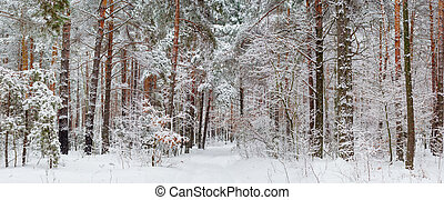 Panorama of the winter forest after a snowfall