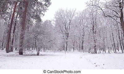 Panorama of the winter forest.