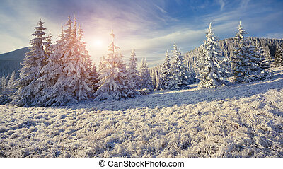 Panorama of the winter morning in the mountains.