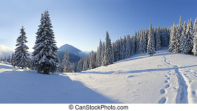 Panorama of the winter morning in the mountains