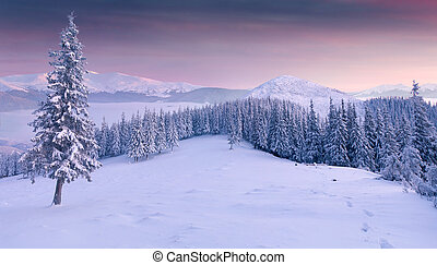 Panorama of the winter sunrise; in the mountains