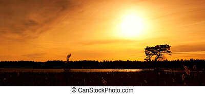 Panorama of tree and forest silhouette at sunset