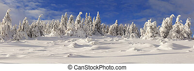 Panorama of trees covered with hoarfrost and snow in mountains