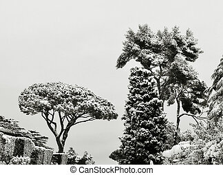 panorama of trees under snow in winter