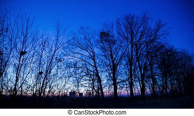 Panorama of twilight in winter forest