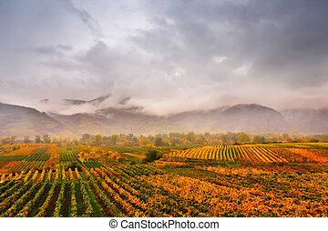 Panorama of Wachau valley. Colorful autumn in vine yards, Austria