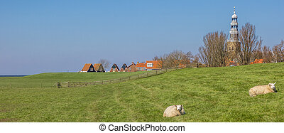 Panorama of white sheep on a dike near Hindeloopen