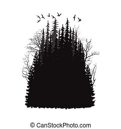 wild coniferous forest - Panorama of wild coniferous forest....
