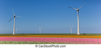 Panorama of wind turbines and a field of pink tulips in Noordoostpolder
