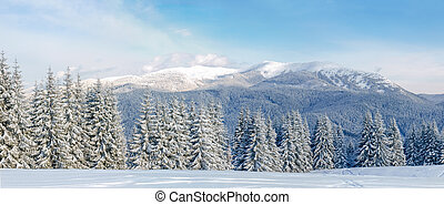 Panorama of winter mountain range in the Carpathians