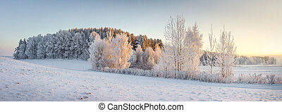 Panorama of winter nature landscape. Panoramic view on frosty trees on snowy meadow in morning with warm yellow sunlight. Christmas background. Xmas time. Wonderful winter