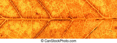 Panorama of yellow and brown autumn leaf