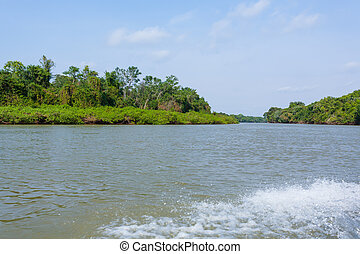 panorama, pantanal, sumpfgebiet, region., brasilianisch
