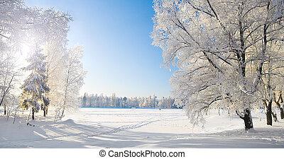 panorama, park., hiver
