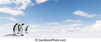 panorama, pingwin