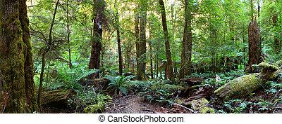panorama, rainforest