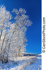 panorama rural winter landscape a with blue sky and forest