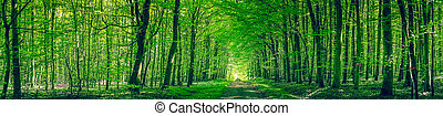 Panorama scenery with a road in a forest