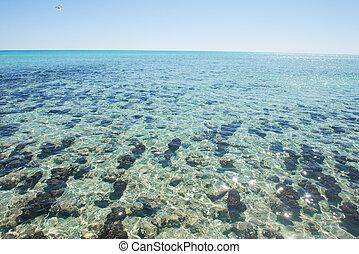 Panorama Stromatolites Hamelin Pool Western Australia