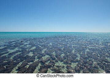 Panorama Stromatolites Shark Bay Australia