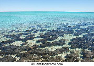 Panorama Stromatolites Shark Bay Western Australia