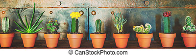 Panorama, various sorts of cactus plants in a row, metallic background