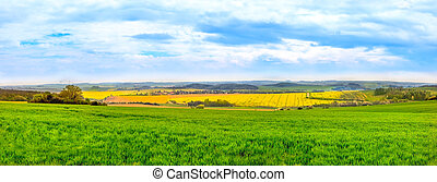 Panorama view of green fields