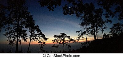 Panorama view silhouette of pine trees with sunset light and blue sky