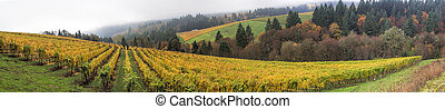 panorama, vignobles, orégon, dundee