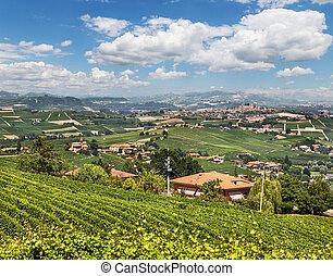 panorama, vignobles, piémont
