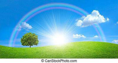 panorama, von, grünes feld, mit, a, großer baum, und, regenbogen, in, blauer himmel