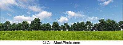 panorama, von, grünes gras, mit, wolke