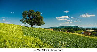 panorama, von, ländlich, szenerie