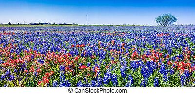 panorama, wildflowers., tejas