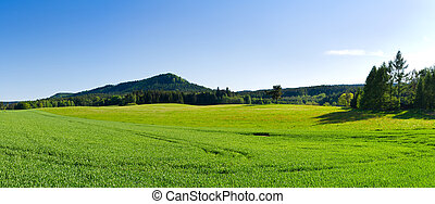 Panorama with green meadow